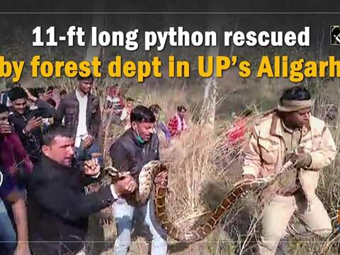 11-ft long python rescued by forest dept in UP's Aligarh