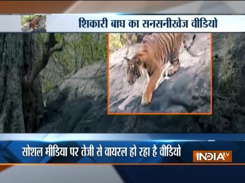 Aaj Ka Viral: Jungle king's breathtaking video