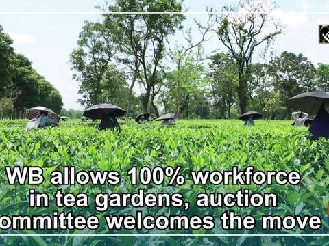 WB allows 100 percent workforce in tea gardens, auction committee welcomes the move
