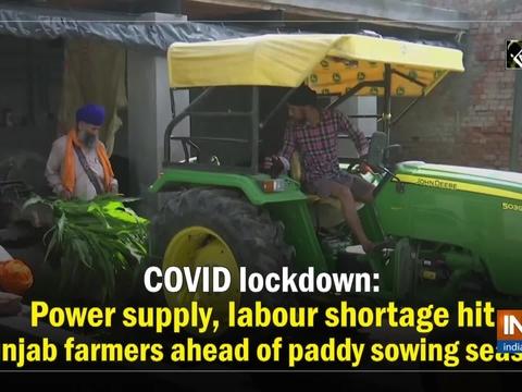 COVID lockdown: Power supply, labour shortage hit Punjab farmers ahead of paddy sowing season